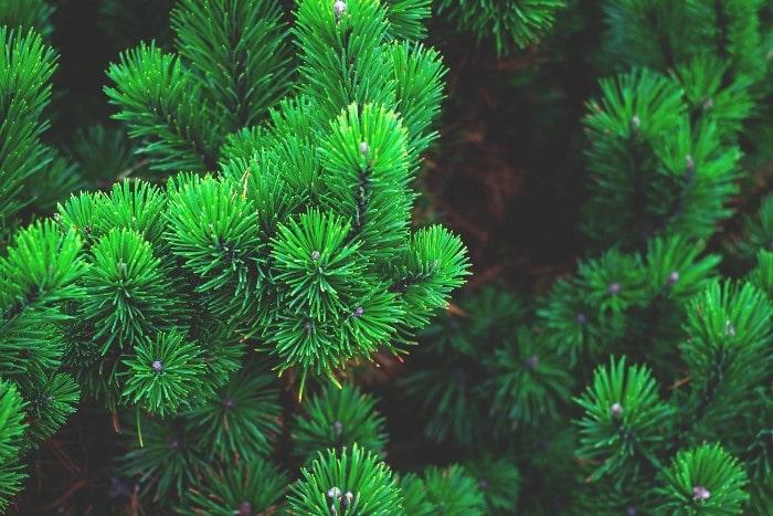Kies Evergreen Onderwerpen voor je Blog